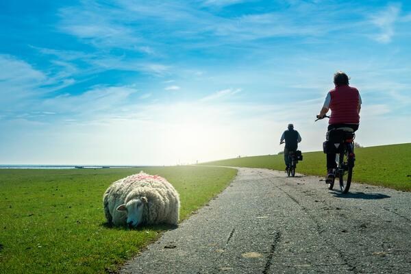 Externer Link: Kalender